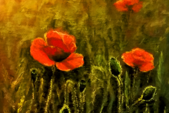 Poppies on green. Soft pastel on paper, 31x48 cm. 2016